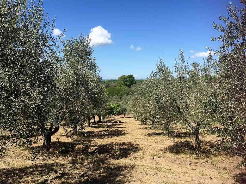 Terreno Agricolo in vendita a Montefiascone, 9999 locali, zona Zona: Commenda, prezzo € 25.000 | Cambio Casa.it