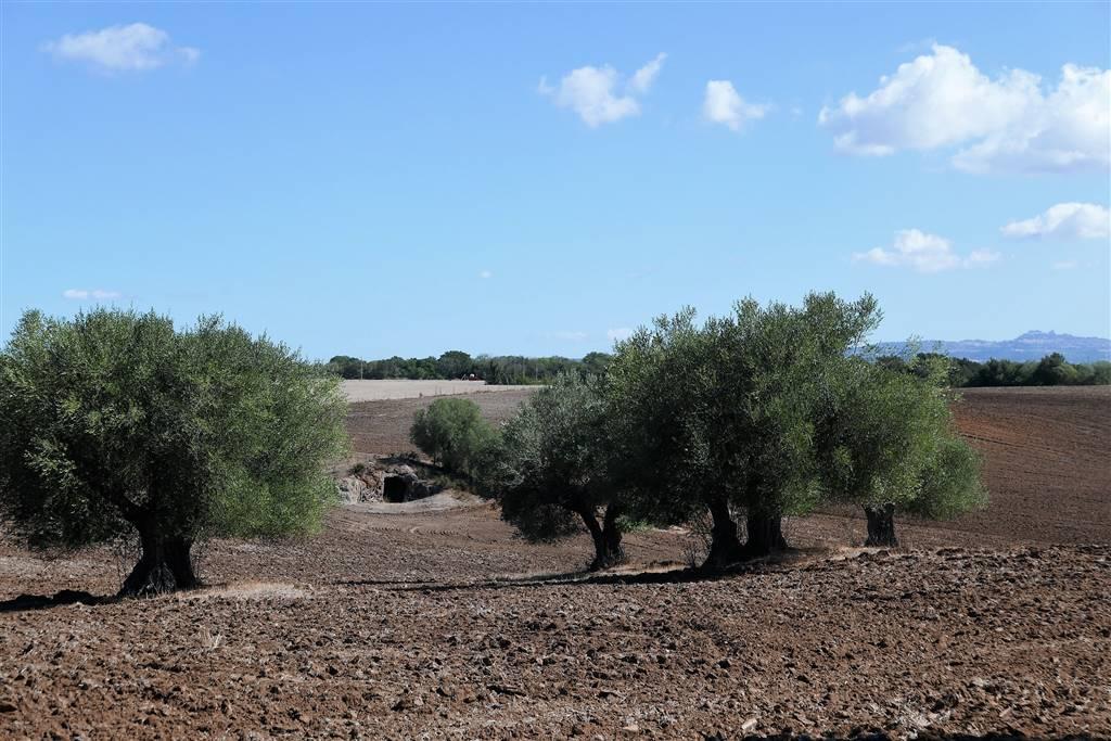 Terreno Agricolo in vendita a Tuscania, 9999 locali, prezzo € 100.000 | CambioCasa.it