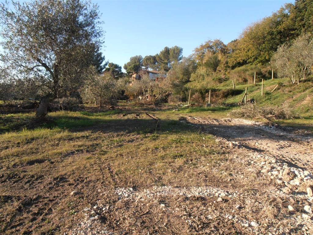 terreno  in Affitto a Livorno