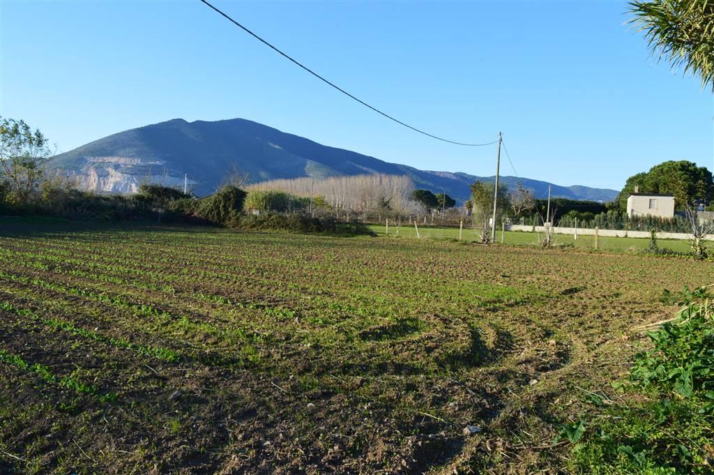 Terreno Agricolo in vendita a Falciano del Massico, 9999 locali, prezzo € 190.000 | Cambio Casa.it