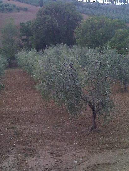 Terreno Agricolo in vendita a San Quirico d'Orcia, 9999 locali, prezzo € 70.000 | Cambio Casa.it
