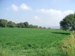 Vendita Terreno edificabile LATINA - SEMICENTRALE