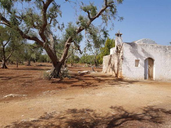 Terreno Agricolo in vendita a Latiano, 9999 locali, zona Località: C.DA SPECCHIA, prezzo € 28.000 | CambioCasa.it