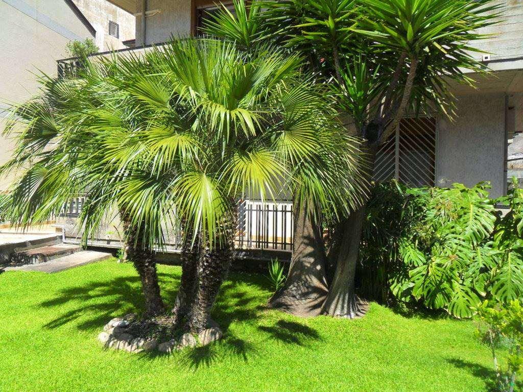 Appartamento in vendita a Aci Castello, 2 locali, zona Zona: Ficarazzi, prezzo € 110.000 | Cambio Casa.it