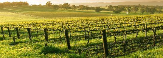 Terreno Agricolo in vendita a Ruviano, 9999 locali, prezzo € 60.000 | Cambio Casa.it