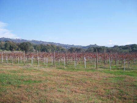 Terreno vendita CAIAZZO (CE) - 7 LOCALI - 21000 MQ