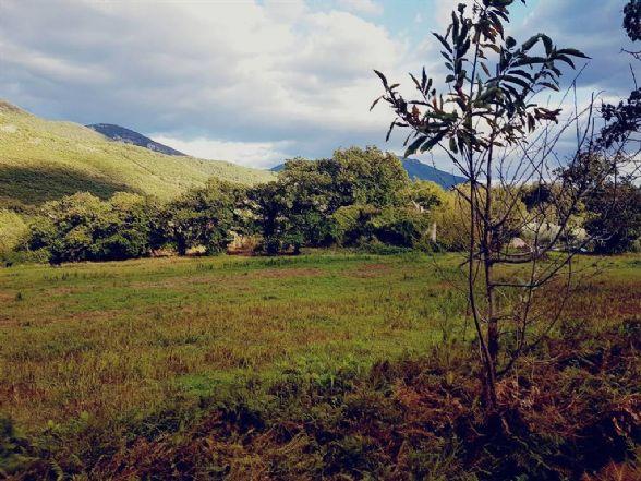 Terreno Agricolo in vendita a Formicola, 9999 locali, zona Zona: Lautoni, prezzo € 79.000 | CambioCasa.it