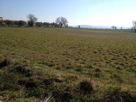Terreno Agricolo in vendita a Vetralla, 9999 locali, zona Località: DOGANE, prezzo € 70.000 | CambioCasa.it