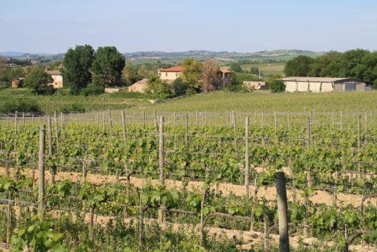 Azienda Agricola in vendita a Montalcino, 9999 locali, Trattative riservate | CambioCasa.it