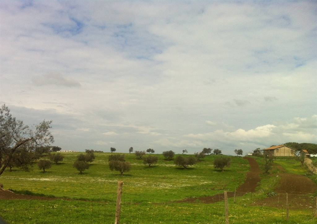 Terreno Agricolo in vendita a Montalto di Castro, 9999 locali, Trattative riservate | CambioCasa.it