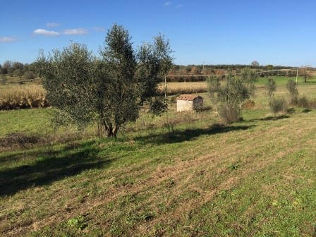 Azienda Agricola in vendita a Viterbo, 9999 locali, zona Zona: Periferia, prezzo € 200.000 | Cambio Casa.it