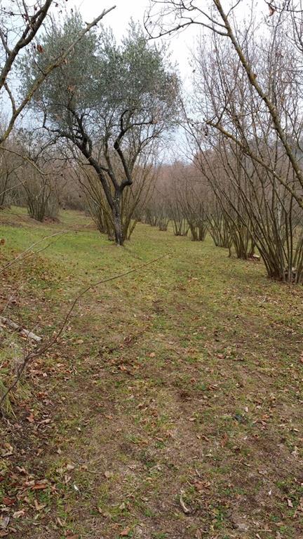 Terreno Agricolo in vendita a Viterbo, 9999 locali, zona Zona: Bagnaia, prezzo € 39.000 | Cambio Casa.it