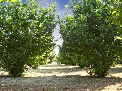 Terreno Agricolo in vendita a Ronciglione, 9999 locali, Trattative riservate | Cambio Casa.it