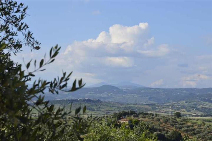 Terreno Agricolo in Vendita a Manciano