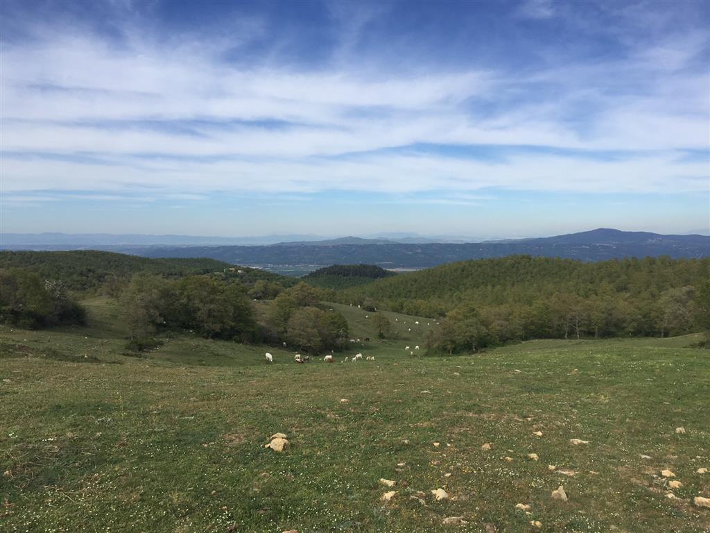 Terreno Agricolo in vendita a San Casciano dei Bagni, 9999 locali, zona Zona: Celle sul Rigo, prezzo € 435.000 | CambioCasa.it