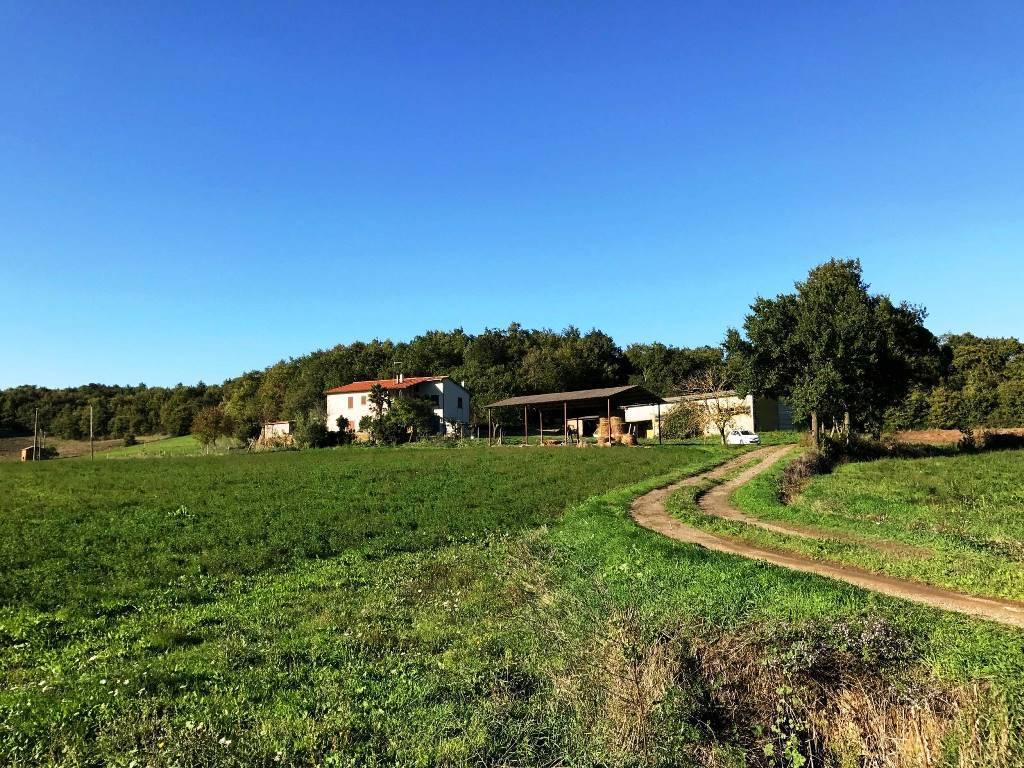 Azienda Agricola in vendita a Montefiascone, 11 locali, prezzo € 480.000 | Cambio Casa.it