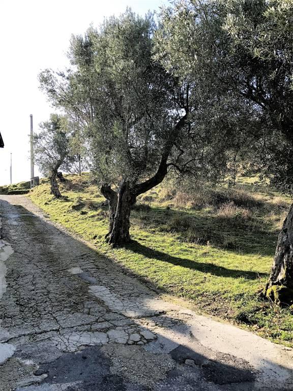 Terreno Agricolo in vendita a Rende, 9999 locali, zona Località: MALVITANI, prezzo € 35.000 | CambioCasa.it