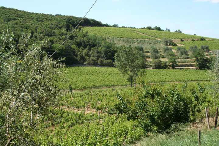 Azienda Agricola in vendita a Montalcino, 9999 locali, prezzo € 6.000.000 | CambioCasa.it