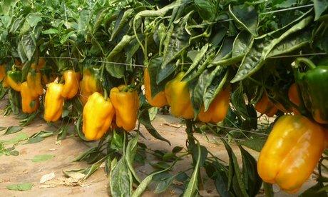 Terreno Agricolo in vendita a Camaiore, 9999 locali, zona Zona: Capezzano Pianore, prezzo € 35.000 | Cambiocasa.it