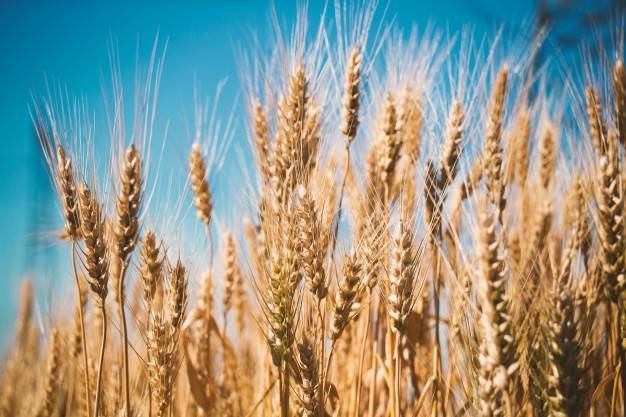 Terreno agricoloaVIAREGGIO