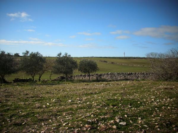 Terreno Agricolo in vendita a Altamura, 9999 locali, prezzo € 12.000 | CambioCasa.it