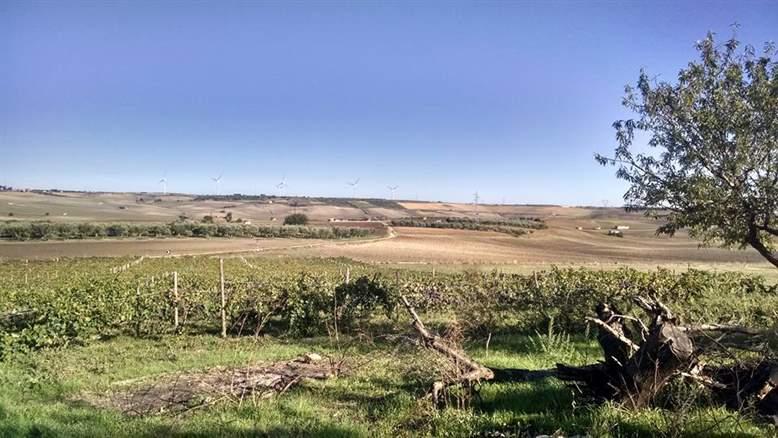 Azienda Agricola in Vendita a Altamura