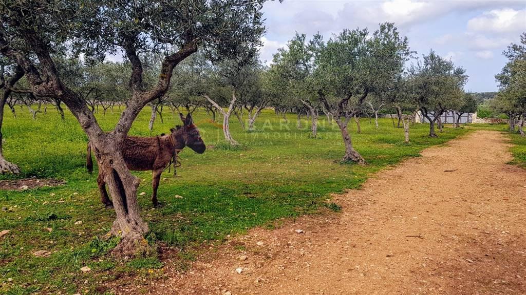 agriturismo-azienda agricola in Vendita Altamura in provincia di Bari