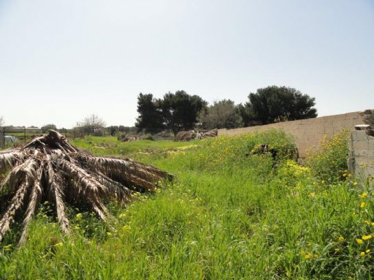 Terreno Agricolo in vendita a Mola di Bari, 9999 locali, prezzo € 45.000 | Cambio Casa.it
