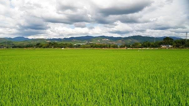 agriturismo-azienda agricola Vendita Vercelli