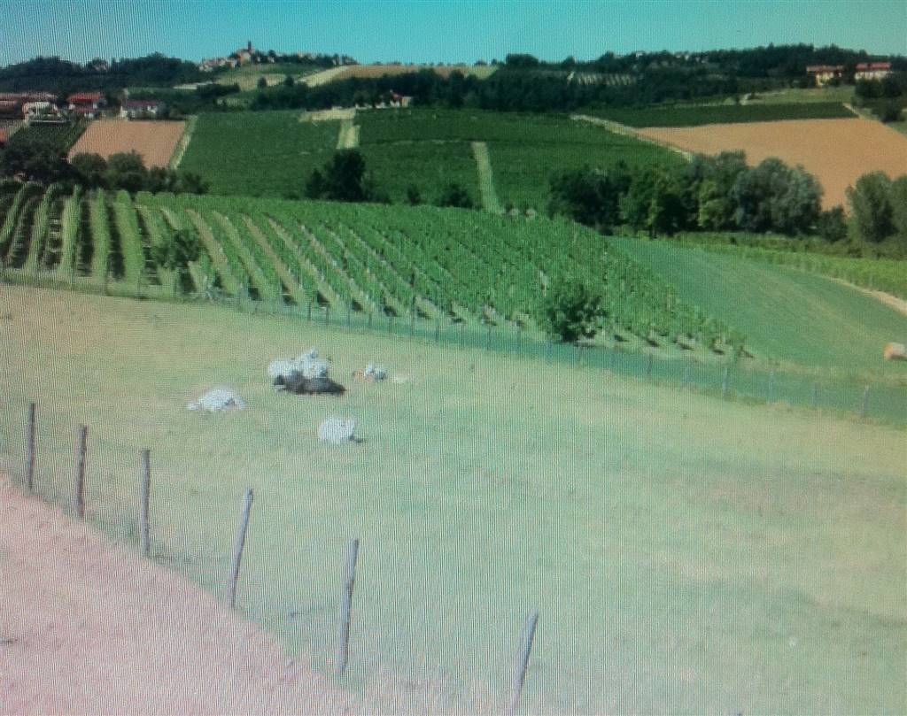 agriturismo-azienda agricola Vendita Casale Monferrato