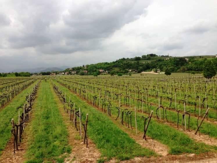 Terreno Edificabile Residenziale in vendita a Colognola ai Colli, 9999 locali, prezzo € 210.000 | Cambio Casa.it