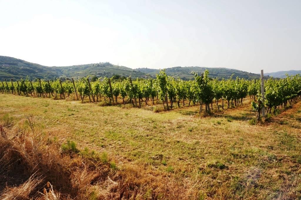 Terreno Agricolo in Vendita a San Martino Buon Albergo