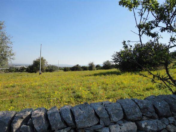 Terreno Agricolo in vendita a Comiso, 9999 locali, prezzo € 130.000   CambioCasa.it