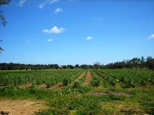 Terreno Agricolo in vendita a Mesagne, 9999 locali, prezzo € 50.000 | Cambio Casa.it