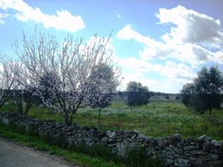 Terreno Agricolo in vendita a Mesagne, 9999 locali, zona Località: VIA SAN DONACI, prezzo € 45.000 | Cambio Casa.it