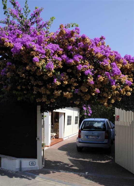 Villa in Vendita a Forte Dei Marmi: 5 locali, 180 mq - Foto 2