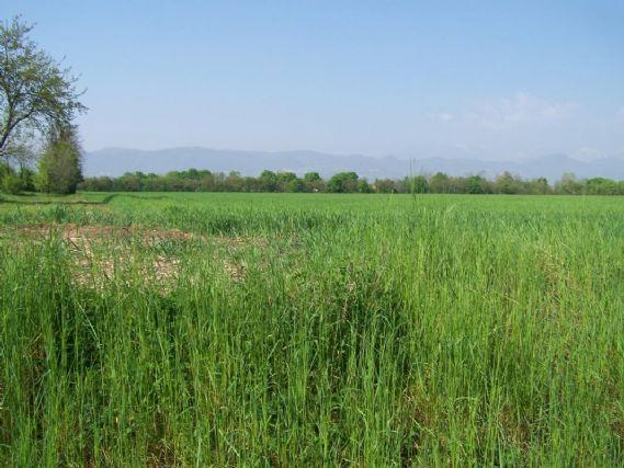 Terreno Edificabile Residenziale in vendita a Zanè, 9999 locali, prezzo € 160.000 | Cambio Casa.it