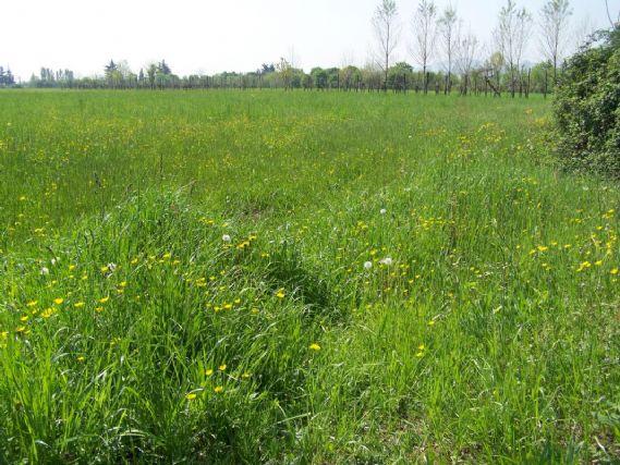Terreno Edificabile Residenziale in vendita a Zanè, 9999 locali, prezzo € 220.000 | CambioCasa.it