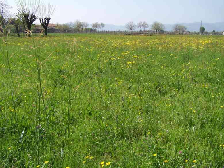 Terreno Agricolo in Vendita a Zanè