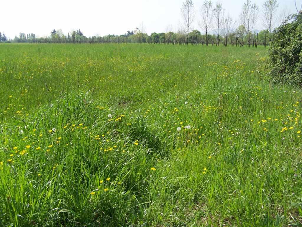 Terreno Agricolo in vendita a Zanè, 9999 locali, prezzo € 30.000 | CambioCasa.it