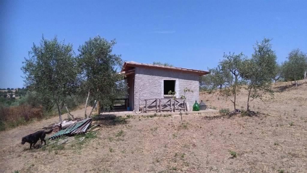 Terreno Agricolo in vendita a Civitella San Paolo, 9999 locali, prezzo € 29.000 | Cambio Casa.it