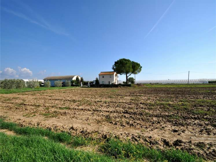 Azienda agricola, Campiglia Marittima