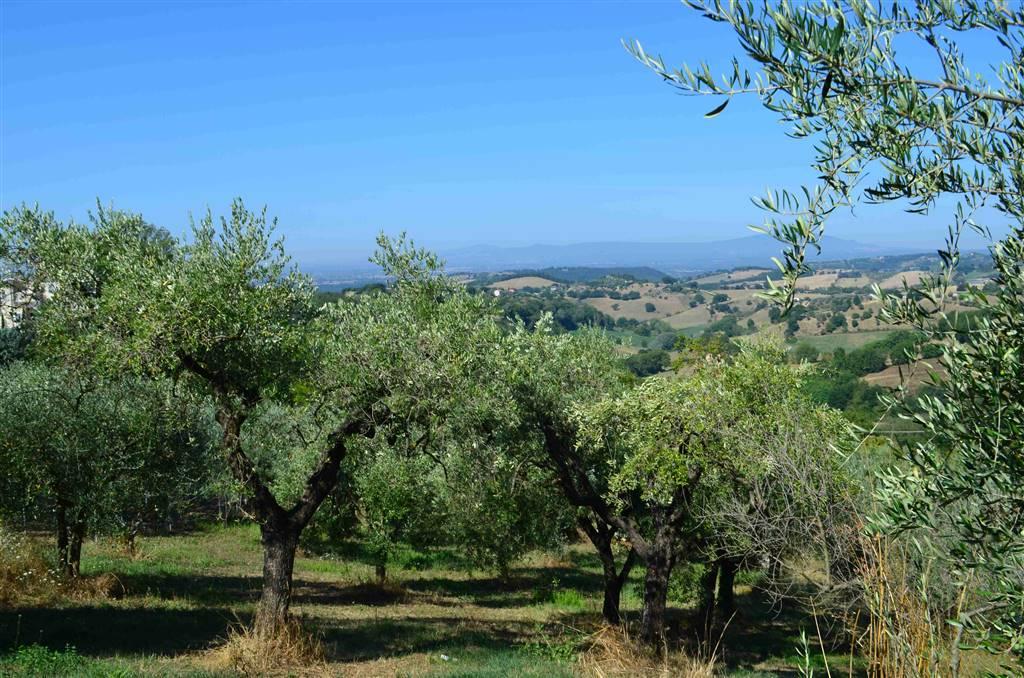 Terreno Edificabile Residenziale in vendita a Collevecchio, 9999 locali, prezzo € 29.000 | CambioCasa.it