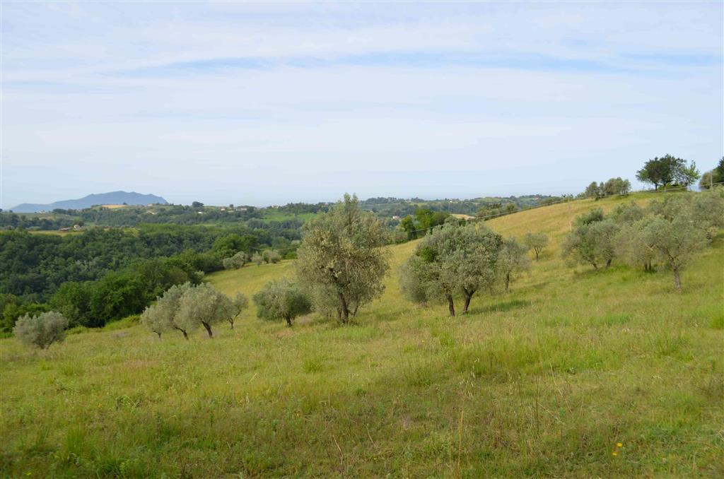 Terreno Agricolo in vendita a Tarano, 9999 locali, prezzo € 90.000 | CambioCasa.it