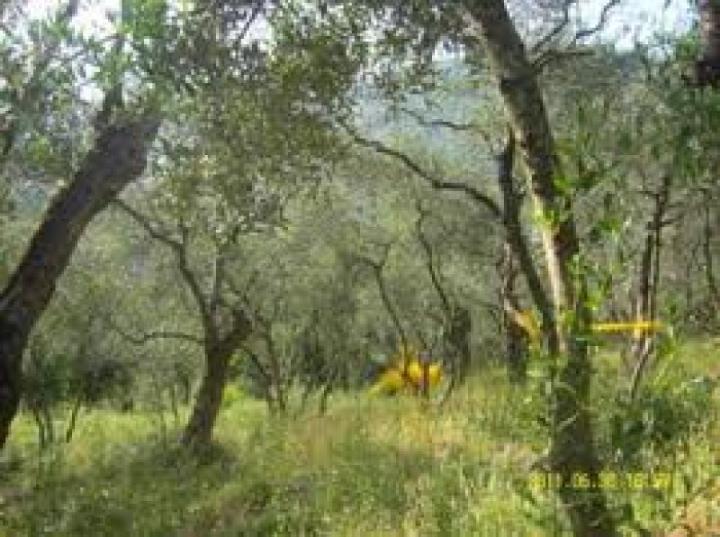 Terreno Edificabile Residenziale in vendita a Peccioli, 9999 locali, prezzo € 140.000 | CambioCasa.it