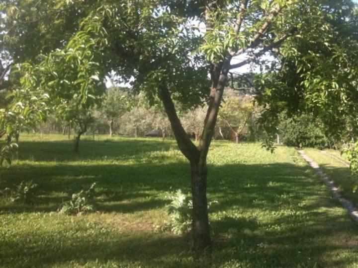 Terreno Agricolo in Vendita a Palaia