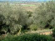 Terreno Agricolo in vendita a Peccioli, 9999 locali, zona Zona: Fabbrica, prezzo € 42.000 | CambioCasa.it