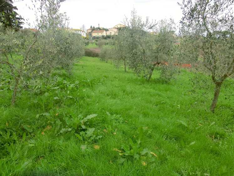 Terreno Agricolo in vendita a Capannoli, 9999 locali, zona Zona: Solaia, prezzo € 30.000 | CambioCasa.it