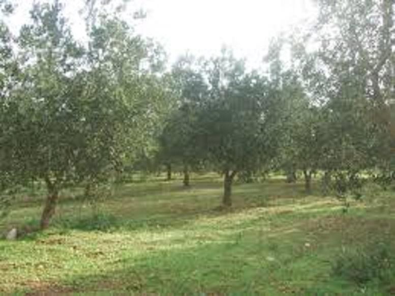 Terreno Edificabile Residenziale in vendita a Capannoli, 9999 locali, zona Zona: Solaia, prezzo € 85.000 | CambioCasa.it