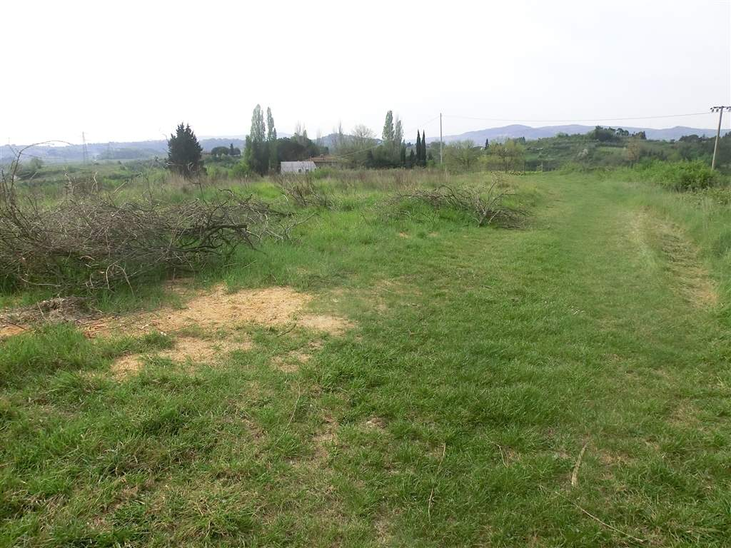 Terreno Agricolo in Vendita a Capannoli